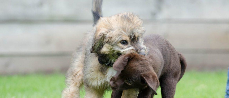 dog-puppies-672881_1920